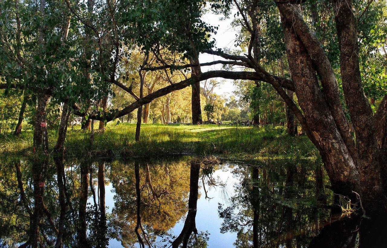 trees, landscape, nature-4558229.jpg